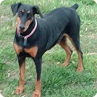 Adopt A Pet :: Tosha - E. Greenwhich, RI