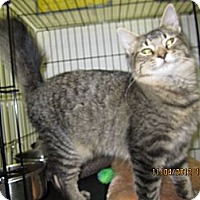 Adopt A Pet :: Rooster - Jeffersonville, IN