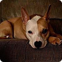 Adopt A Pet :: Nala - Hancock, MI