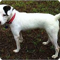 Adopt A Pet :: Tucker in Houston - Houston, TX