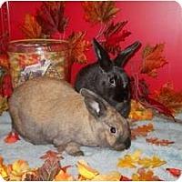 Adopt A Pet :: Hannah & Toodie - Roseville, CA