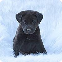 Adopt A Pet :: Cary - New Boston, NH
