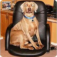 Adopt A Pet :: Bailey - Eustis, FL