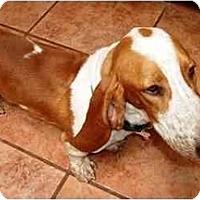 Adopt A Pet :: Turner - Phoenix, AZ