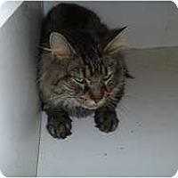 Adopt A Pet :: Horus - Hamburg, NY