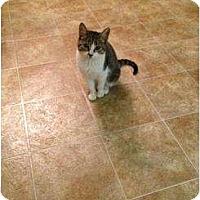 Adopt A Pet :: Tiny Girl - Mobile, AL