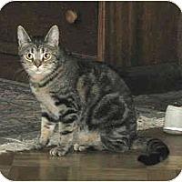 Adopt A Pet :: Chloe (good company!) - Portland, OR
