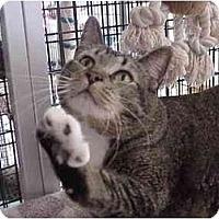 Adopt A Pet :: Dharma - Deerfield Beach, FL