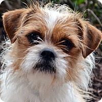 Adopt A Pet :: Yumi-Adoption pending - Bridgeton, MO