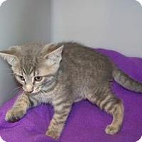 Adopt A Pet :: Jesse - Westville, IN