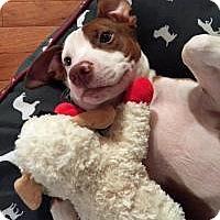 Adopt A Pet :: Lucas - Jasper, GA