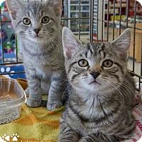 Adopt A Pet :: Leia - Merrifield, VA