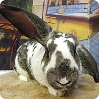 Adopt A Pet :: Jake - Foster, RI