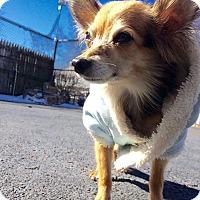 Adopt A Pet :: Dori - Oak Ridge, NJ