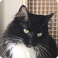 Adopt A Pet :: Charlotte - LaGrange, KY