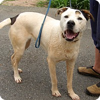 Adopt A Pet :: Tonx (60 lb) Close To PERFECT - Niagara Falls, NY