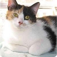 Adopt A Pet :: Zoe- Playful - Cincinnati, OH