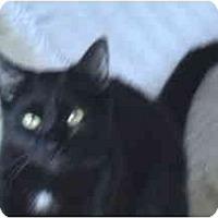 Adopt A Pet :: Wuss - Syracuse, NY
