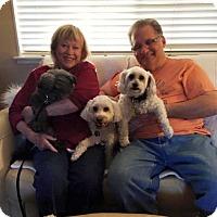Adopt A Pet :: Butler - Sacramento, CA