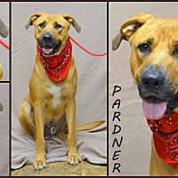 Hound (Unknown Type)/Labrador Retriever Mix Dog for adoption in Jackson, Mississippi - Pardner