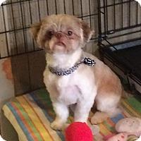 Adopt A Pet :: Chad - Homer Glen, IL