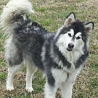Adopt A Pet :: Roxy - Memphis, TN