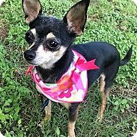Adopt A Pet :: Brie - AUSTIN, TX