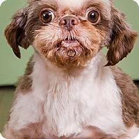 Adopt A Pet :: Riggs - Owensboro, KY