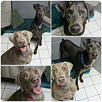 Adopt A Pet :: Cooper & Daisy - Forked River, NJ