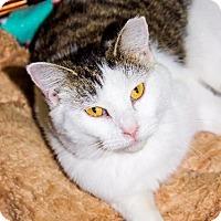 Adopt A Pet :: Luna - Columbus, GA