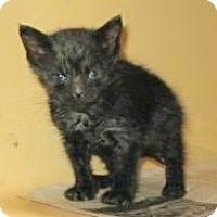 Adopt A Pet :: Fuzz - Brooklyn, NY