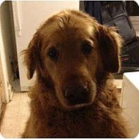 Adopt A Pet :: Waylon - Denver, CO