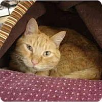 Adopt A Pet :: Percy - Chesapeake, VA