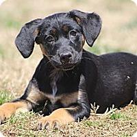 Adopt A Pet :: Bonne Bell - Wytheville, VA