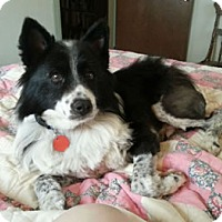Adopt A Pet :: Buddy - Oliver Springs, TN