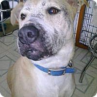 Adopt A Pet :: Kix - Corpus Christi, TX