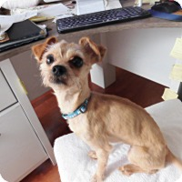 Adopt A Pet :: Yittles - West Deptford, NJ