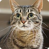 Adopt A Pet :: Ziva - East Hartford, CT