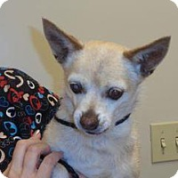 Adopt A Pet :: Chewy - Wildomar, CA