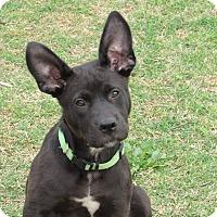 Adopt A Pet :: Noah - Broken Arrow, OK