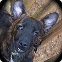 Adopt A Pet :: Lyon - Ijamsville, MD