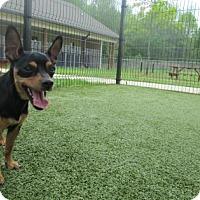 Adopt A Pet :: Spunk - Cumming, GA