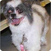 Adopt A Pet :: Lilee - Gilbert, AZ