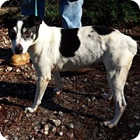 Adopt A Pet :: Russ - Athens, GA