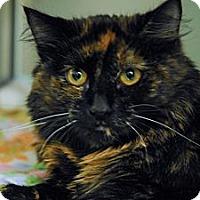 Adopt A Pet :: Marley - Lunenburg, MA