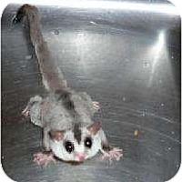Adopt A Pet :: Mystic - Van Alstyne, TX