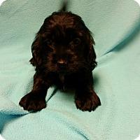 Adopt A Pet :: Carson - Hazard, KY