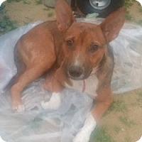 Adopt A Pet :: Gracie - Long Beach, CA
