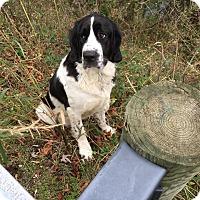 Adopt A Pet :: RUTHIE - Cadiz, OH