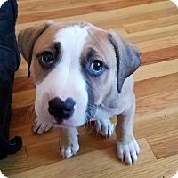 Adopt A Pet :: NALA - Sterling, MA